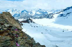 Alp flowers and ski lift Stock Image