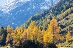 Alp forest Royalty Free Stock Images