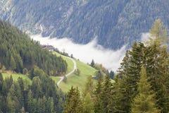 Alp forest landscape Stock Images