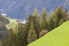 Alp forest landscape Stock Image