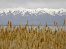 Alp Mountain View scenico pittoresco Immagine Stock Libera da Diritti