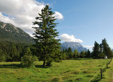 Alp pasture royalty free stock photography