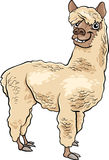 Alpaca animal cartoon illustration Stock Photo