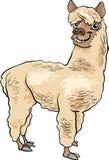 Alpaca animal cartoon illustration Stock Photo