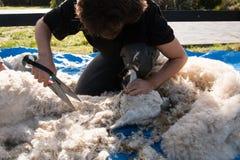 Alpaca blade shearing Royalty Free Stock Photo