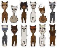 Alpaca cartoon vector set. Alpaca animal cartoon vector set Royalty Free Stock Photo