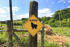 Alpaca Crossing Stock Image