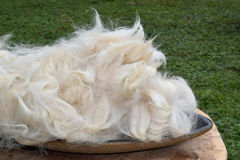 Alpaca Fiber Stock Photo