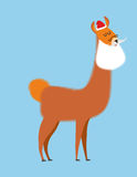 Alpaca Lama Santa Claus. Wild animal with beard and moustache. C Stock Images