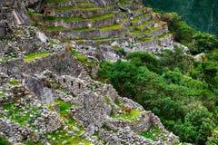 Alpaca a Machu Picchu Immagini Stock