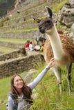 Alpaca och kvinna Arkivfoton