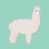 Alpaca peluda linda Fotos de archivo libres de regalías