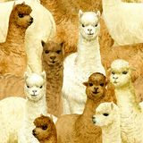 Alpaca seamless