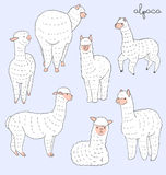 Alpaca Set Stock Image