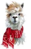 Alpaca som bär en röd halsduk royaltyfri bild