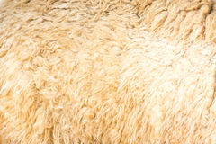 Alpaca wool background Stock Photo