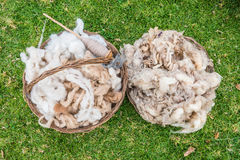 Alpaca wool peruvian Andes  Cuzco Peru Stock Photo