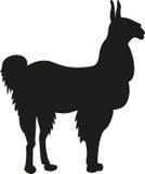 Alpacasilhouet Stock Fotografie
