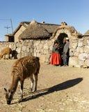 Alpaga, lana peruviana, Perù Fotografie Stock