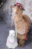 Alpaga nella porcellana di dali Fotografie Stock Libere da Diritti