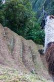 Alpaga su Inca Trail peru Il Sudamerica Immagini Stock Libere da Diritti
