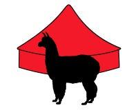 Alpaka im Zirkus Stockfoto