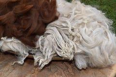 Alpakawolle und Verschlüsse Stockbild