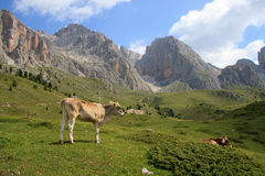 Alpe Cisles Fotografia Stock
