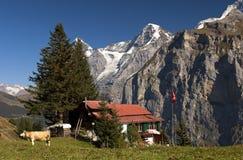 Alpe con la casa dell'azienda agricola, Svizzera Immagine Stock Libera da Diritti