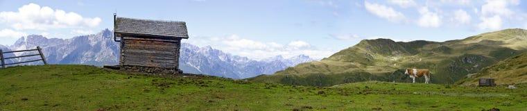 Alpe con la mucca e la cabina di legno Fotografie Stock Libere da Diritti