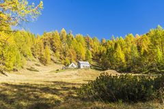 Alpe devero autumnal mountain landscape. A couple of houses inside a larches trees forest with a blue sky in the background inside the Alpe Devero stock images