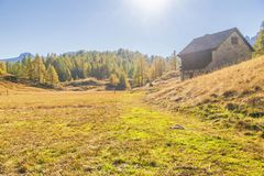 Alpe devero autumnal mountain landscape. Grass meadows inside the Alpe Devero flat land with a stone house in the foreground and a larches and pines trees forest royalty free stock photos