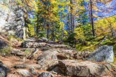 Alpe devero autumnal mountain landscape. A stone footpath inside a larches trees forest with a blue sky in the background inside the Alpe Devero royalty free stock image