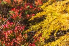 Alpe devero góry jesienny krajobraz zdjęcia royalty free