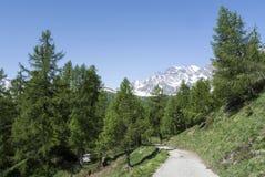 Alpe di Devero, percorso della montagna attraverso la foresta del tre Fotografie Stock Libere da Diritti