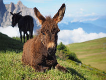 Alpe Di Siusi Stock Foto's