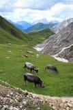 Alpe di Siusi Stock Photos