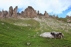 Alpe di Siusi Royalty Free Stock Photography