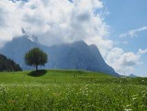 Alpe Di Siusi - Seiser Alm Stock Afbeeldingen