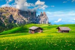 Alpe Di Siusi toevlucht en de lente gele paardebloemen, Dolomiet, Italië stock afbeelding