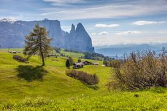 Alpe di Siusi with a view of the Schlern Royalty Free Stock Photos