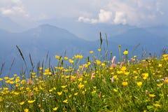 Alpe durante l'estate Fotografie Stock Libere da Diritti