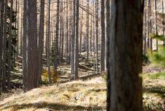 Alpe Holz Stockfoto