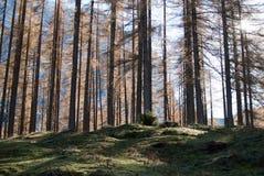 Alpe Holz Stockfotografie