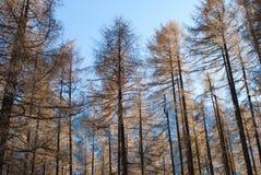 Alpe Holz Lizenzfreies Stockfoto