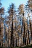 Alpe Holz Lizenzfreie Stockfotografie
