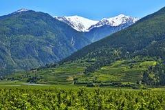 Alpe-vista italiana dello Stelvio e dei meleti Fotografia Stock
