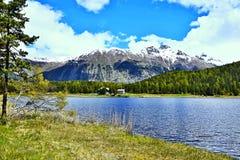 Alpe-vista svizzera del lago di Staz Immagini Stock