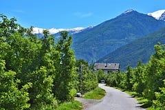 Alpe-viste italiane dello Stelvio Immagine Stock