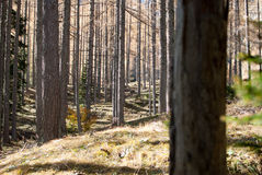 Alpe wood Stock Photo